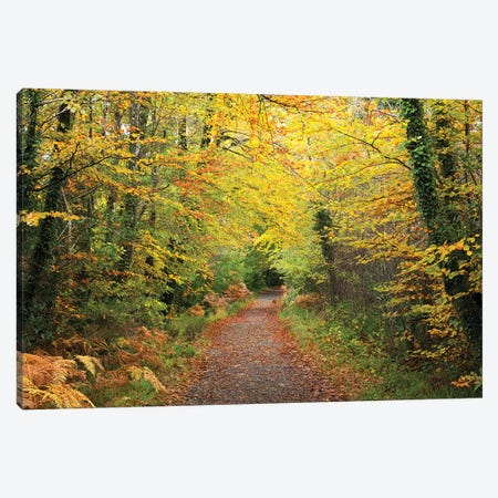 Autumn Walking Path In Tourmakeady Woods, County Mayo, Ireland Canvas Print #GAR104} by Gareth McCormack Art Print