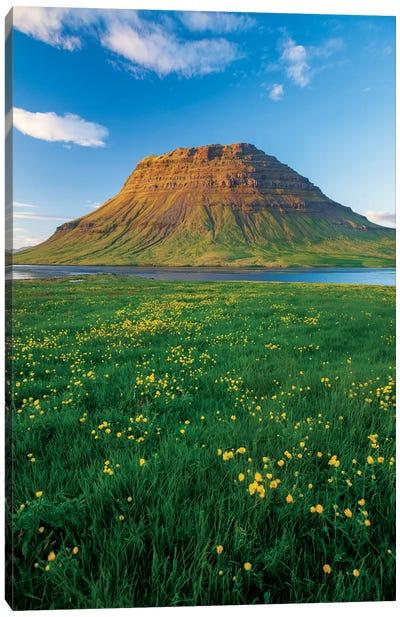 Buttercup Meadow II, Kirkjufell, Grundarfjordur, Snaefellsnes Peninsula, Vesturland, Iceland Canvas Art Print