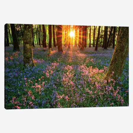 Impressions Of Bluebells, Cootehall, County Roscommon, Ireland Canvas Print #GAR113} by Gareth McCormack Art Print