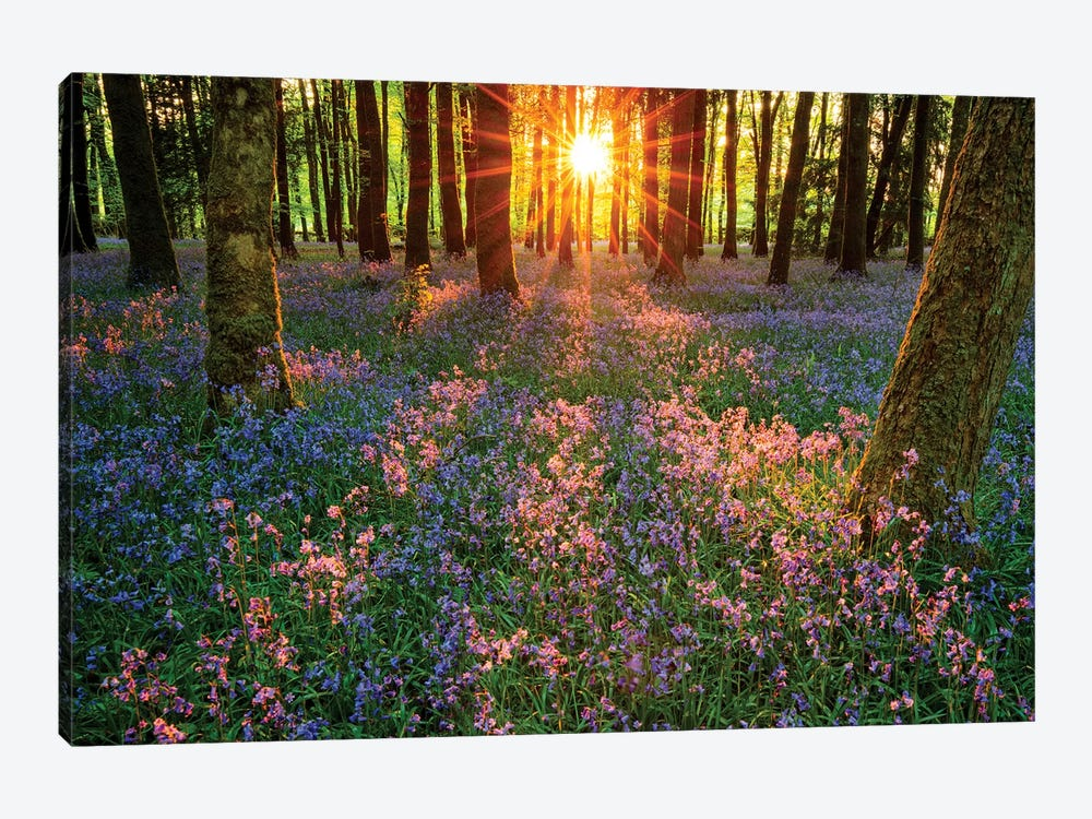 Impressions Of Bluebells, Cootehall, County Roscommon, Ireland by Gareth McCormack 1-piece Art Print