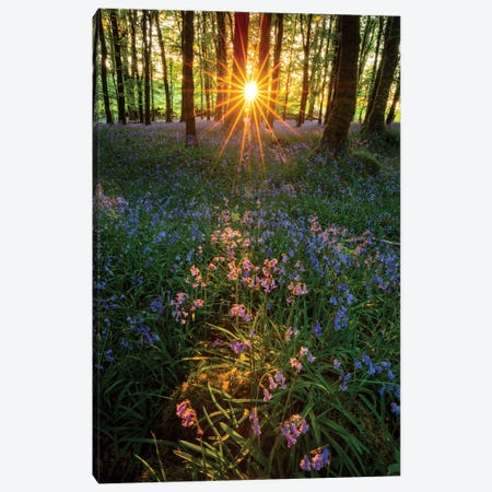 Setting Sun In Bluebell Woodland II Canvas Print #GAR117} by Gareth McCormack Canvas Art
