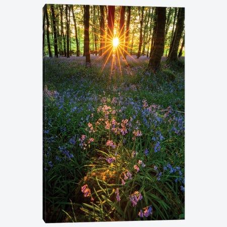 Setting Sun In Bluebell Woodland II Canvas Print #GAR117} by Gareth McCormack Canvas Art