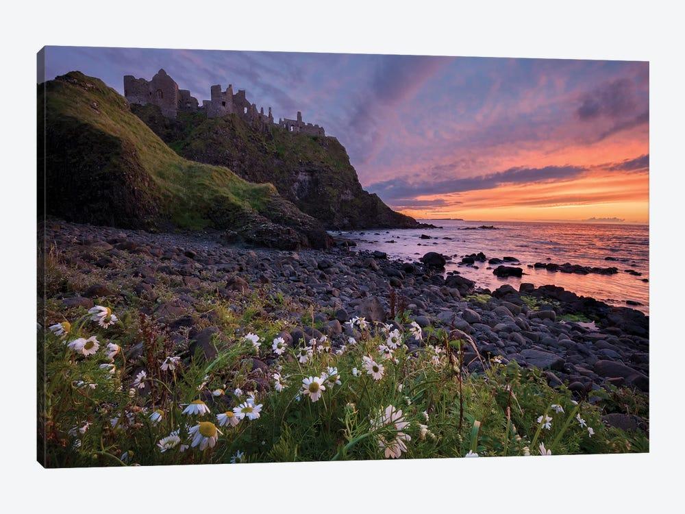 Evening Ox-Eye Daisies Beneath Dunluce Castle, Causeway Coast, County Antrim, Northern Ireland by Gareth McCormack 1-piece Canvas Artwork