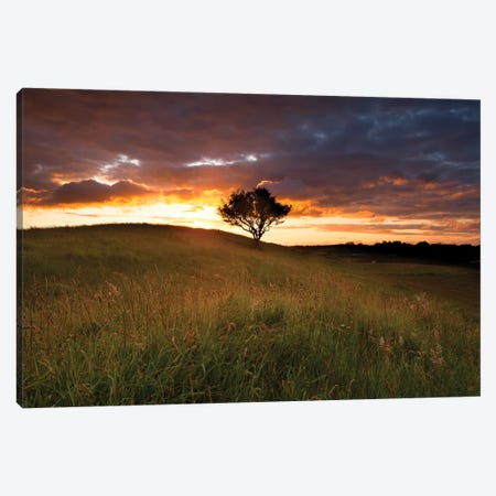 Lone Tree At Sunset, County Mayo, Ireland Canvas Print #GAR159} by Gareth McCormack Canvas Art Print