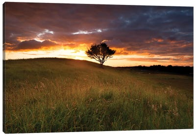 Lone Tree At Sunset, County Mayo, Ireland Canvas Art Print