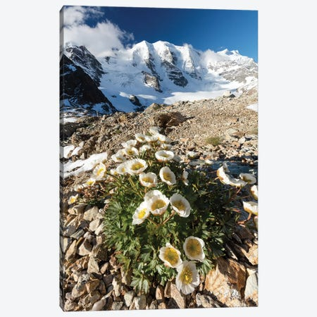 Mountain Aven Beneath Piz Palu I, Berniner Alps, Graubunden, Switzerland Canvas Print #GAR165} by Gareth McCormack Canvas Art Print