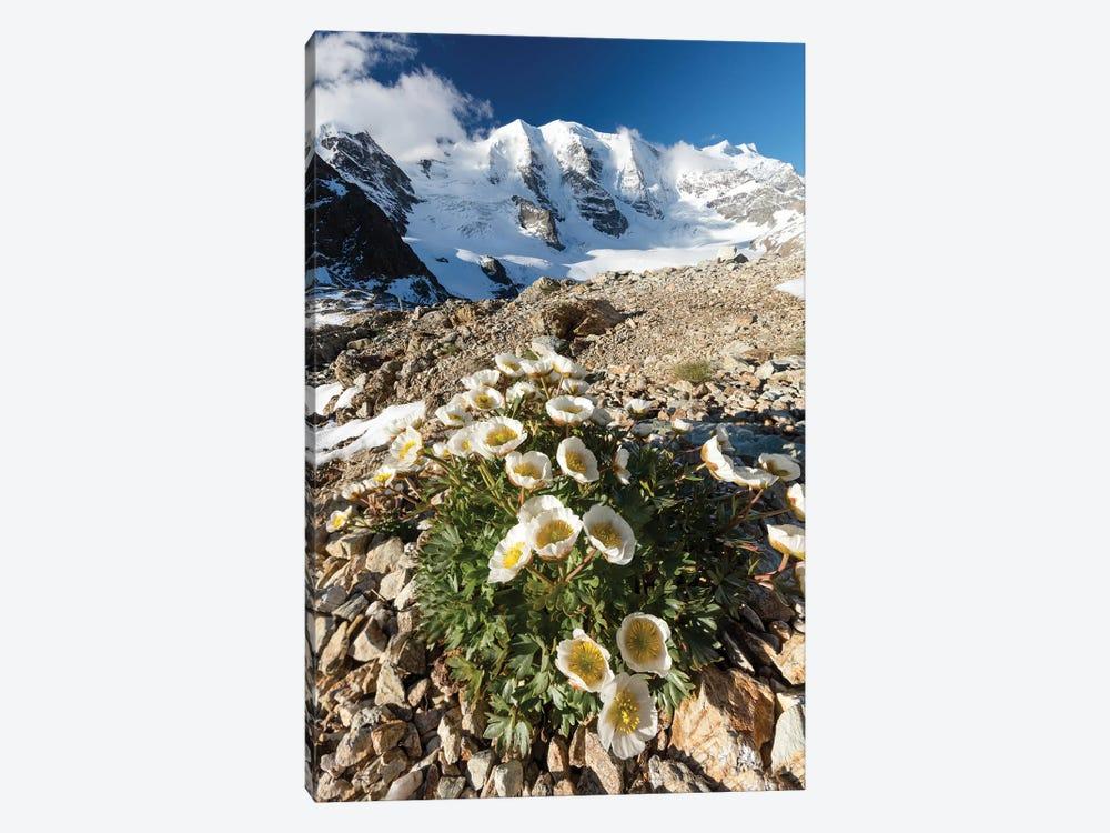 Mountain Aven Beneath Piz Palu I, Berniner Alps, Graubunden, Switzerland by Gareth McCormack 1-piece Canvas Wall Art
