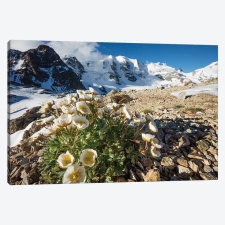 Mountain Aven Beneath Piz Palu II, Berniner Alps, Graubunden, Switzerland Canvas Print #GAR166} by Gareth McCormack Canvas Art Print