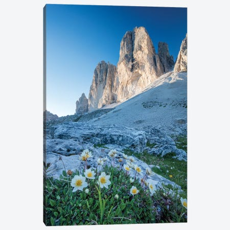 Mountain Aven Beneath Tre Cime Di Lavaredo, Sexten Dolomites, Italy Canvas Print #GAR167} by Gareth McCormack Art Print