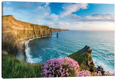 Thrift On The Edge II, Cliffs Of Moher, County Clare, Ireland Canvas Art Print
