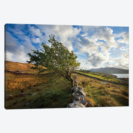 Wind-Bent Hawthorn On A Hillside Above Killary Harbour I, Connemara , County Galway, Ireland Canvas Print #GAR198} by Gareth McCormack Canvas Print