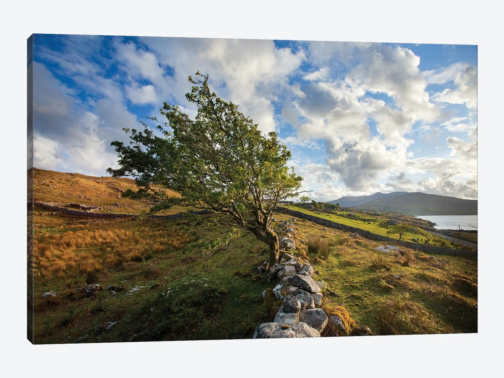 Wind-Bent Hawthorn On A Hillside Above Killary Harbour I, Connemara , County Galway, Ireland by Gareth McCormack 1-piece Canvas Art