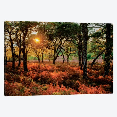 Autumn Evening Landscape, County Mayo, Connacht Province, Republic Of Ireland Canvas Print #GAR1} by Gareth McCormack Canvas Artwork