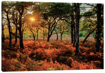 Autumn Evening Landscape, County Mayo, Connacht Province, Republic Of Ireland Canvas Print #GAR1