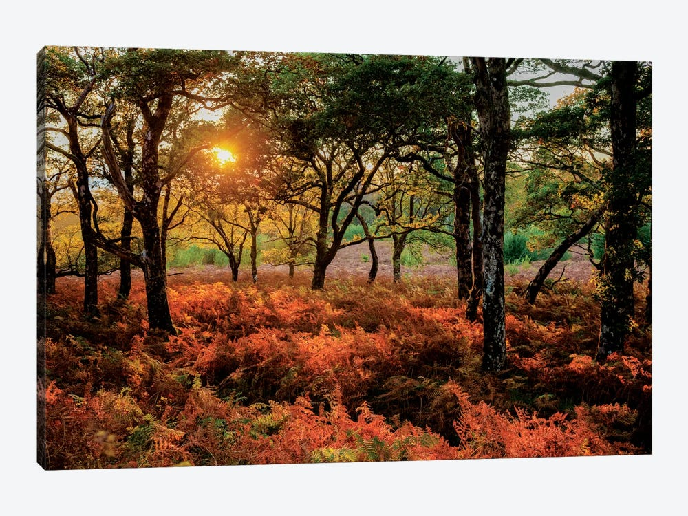 Autumn Evening Landscape, County Mayo, Connacht Province, Republic Of Ireland by Gareth McCormack 1-piece Art Print