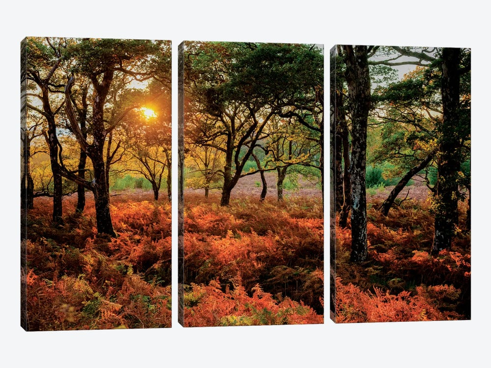 Autumn Evening Landscape, County Mayo, Connacht Province, Republic Of Ireland by Gareth McCormack 3-piece Art Print
