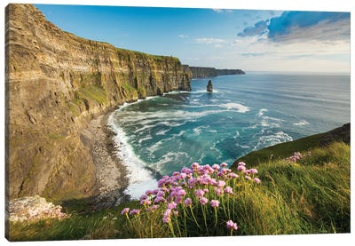 Thrift On The Cliffs Of Moher II Canvas Art Print