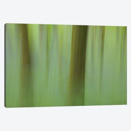 Bluebell Woodland II Canvas Print #GAR209} by Gareth McCormack Canvas Art Print