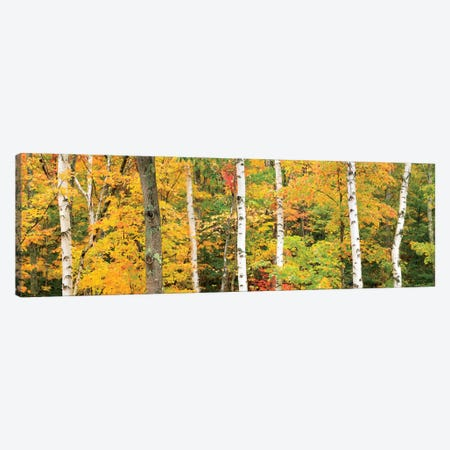 Autumn Forest Landscape, White Mountains, New Hampshire, USA Canvas Print #GAR3} by Gareth McCormack Canvas Wall Art