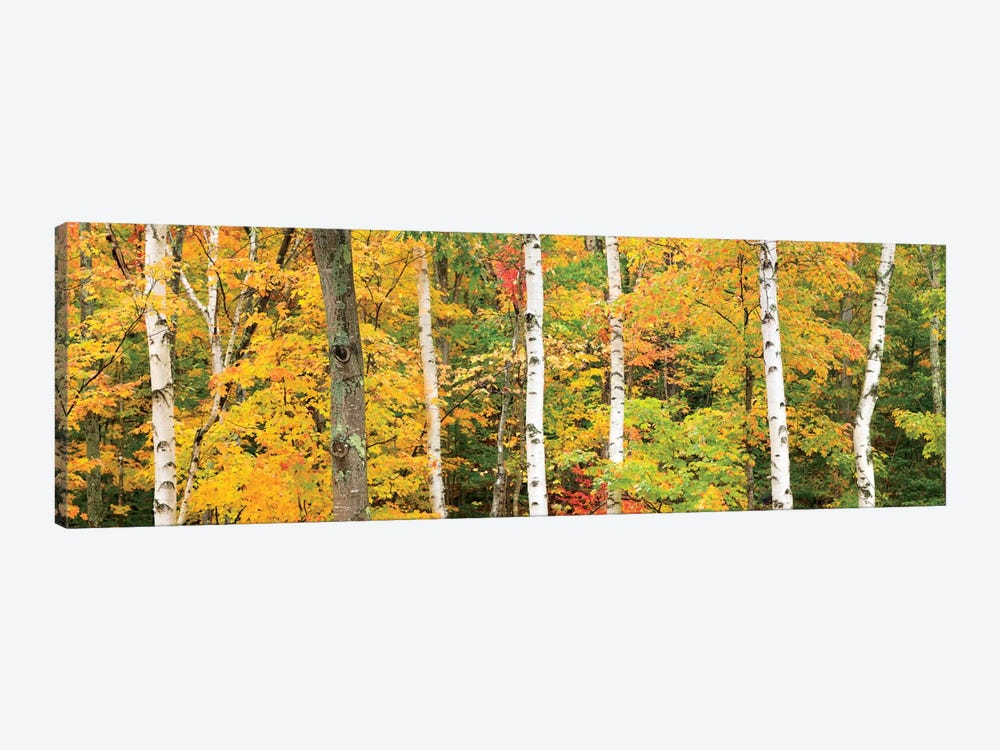 Autumn Forest Landscape, White Mountains, New Hampshire, USA 1-piece Art Print