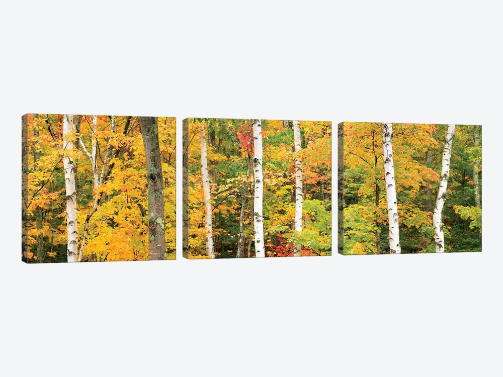 Autumn Forest Landscape, White Mountains, New Hampshire, USA by Gareth McCormack 3-piece Art Print
