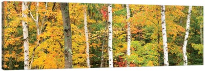 Autumn Forest Landscape, White Mountains, New Hampshire, USA Canvas Art Print