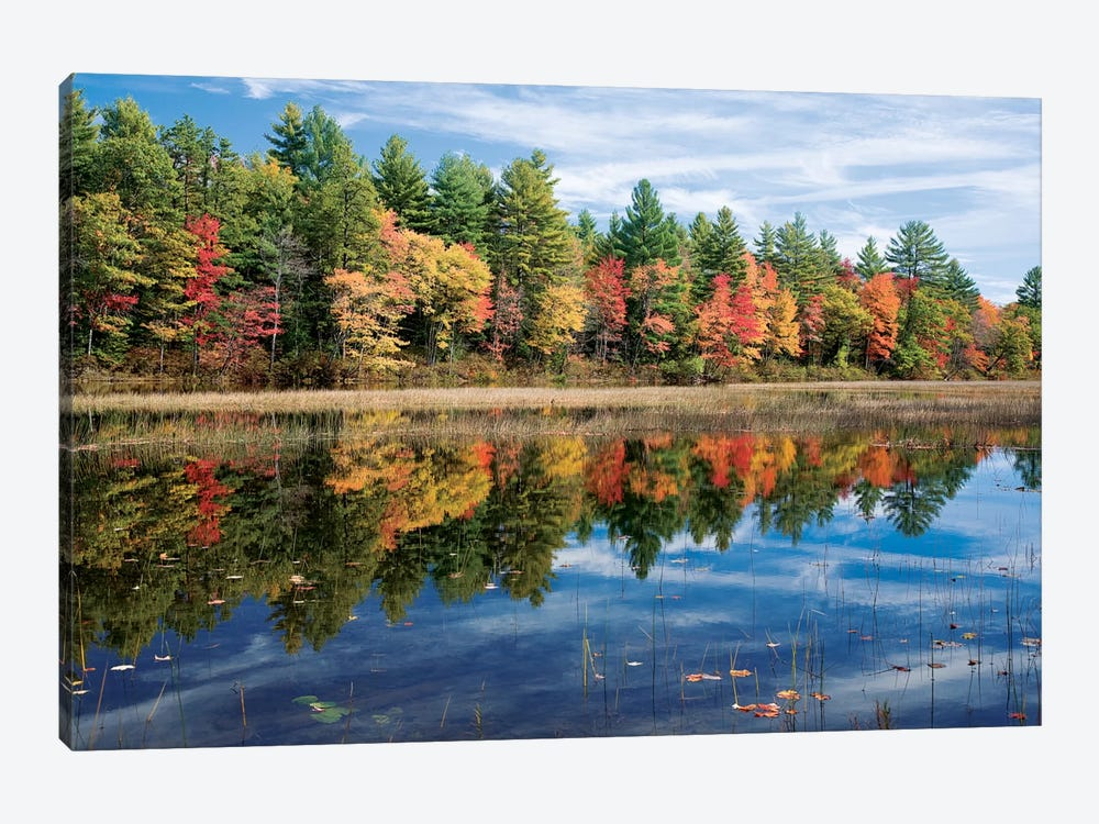 Autumn Reflection I, Ossipee River, Maine, USA by Gareth McCormack 1-piece Canvas Print