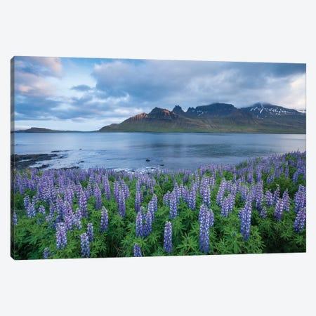 Nootka Lupines I, Stodvarfjordur Fjord, Austurland, Iceland Canvas Print #GAR66} by Gareth McCormack Canvas Art Print