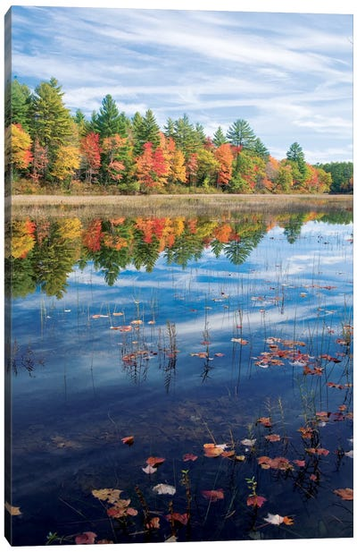 Autumn Reflection II, Ossipee River, Maine, USA Canvas Art Print
