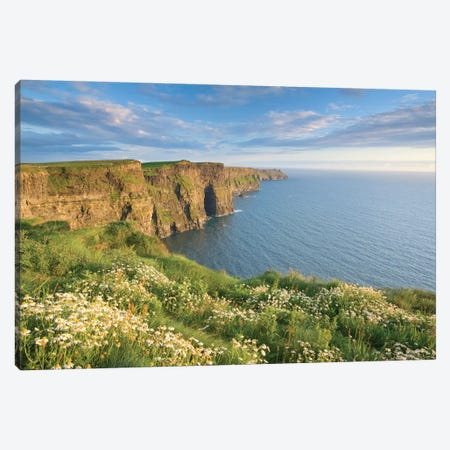 Summer Daisies, Cliffs Of Moher, County Clare, Munster Province, Republic Of Ireland Canvas Print #GAR80} by Gareth McCormack Canvas Wall Art