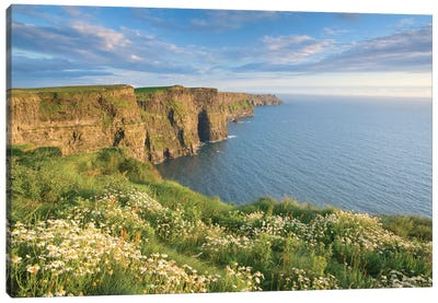 Summer Daisies, Cliffs Of Moher, County Clare, Munster Province, Republic Of Ireland Canvas Art Print