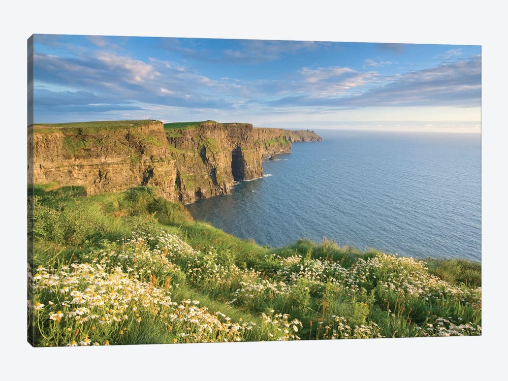 Summer Daisies, Cliffs Of Moher, County Clare, Munster Province, Republic Of Ireland by Gareth McCormack 1-piece Canvas Print