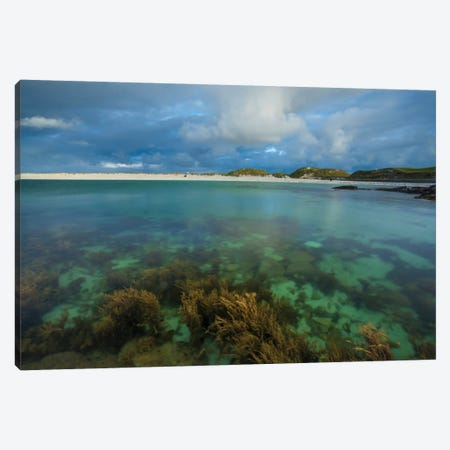 Underwater Garden I, Dog's Bay, Connemara, County Galway, Connacht Province, Republic Of Ireland Canvas Print #GAR97} by Gareth McCormack Canvas Wall Art