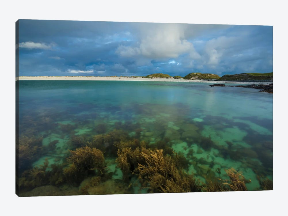 Underwater Garden I, Dog's Bay, Connemara, County Galway, Connacht Province, Republic Of Ireland 1-piece Canvas Art Print