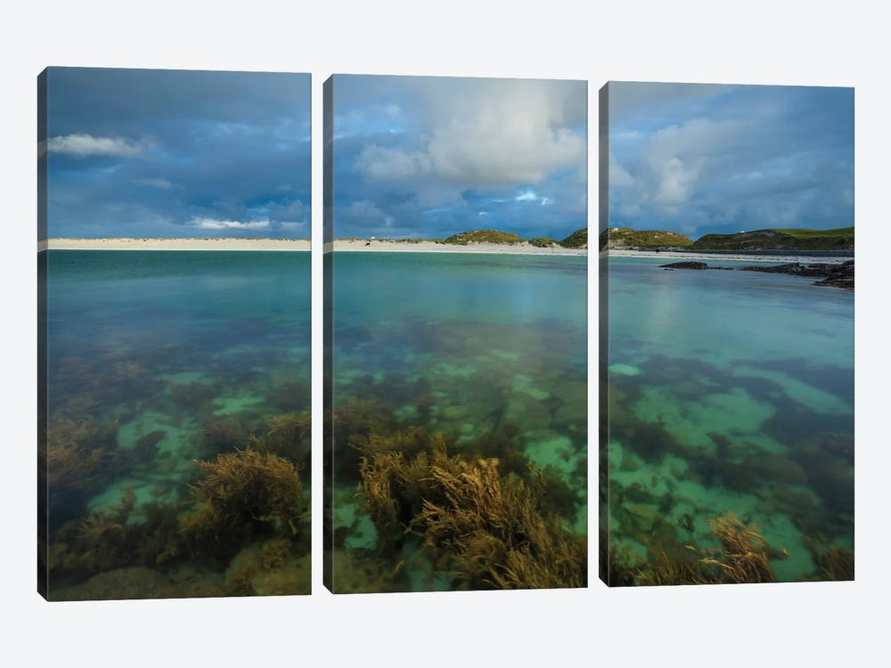 Underwater Garden I, Dog's Bay, Connemara, County Galway, Connacht Province, Republic Of Ireland by Gareth McCormack 3-piece Canvas Print