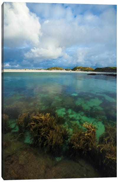 Underwater Garden II, Dog's Bay, Connemara, County Galway, Connacht Province, Republic Of Ireland Canvas Art Print