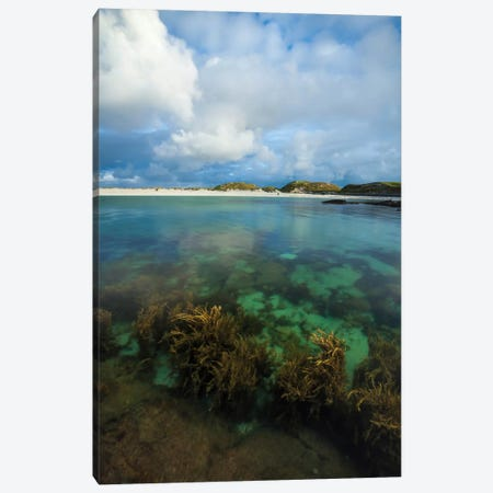 Underwater Garden II, Dog's Bay, Connemara, County Galway, Connacht Province, Republic Of Ireland Canvas Print #GAR98} by Gareth McCormack Canvas Art Print