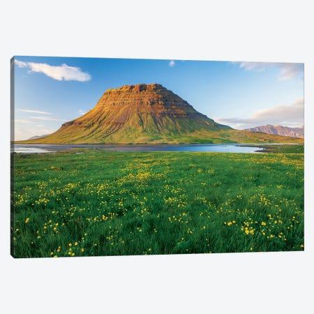 Buttercup Meadow I, Kirkjufell, Grundarfjordur, Snaefellsnes Peninsula, Vesturland, Iceland Canvas Print #GAR9} by Gareth McCormack Canvas Art