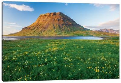 Buttercup Meadow I, Kirkjufell, Grundarfjordur, Snaefellsnes Peninsula, Vesturland, Iceland Canvas Art Print