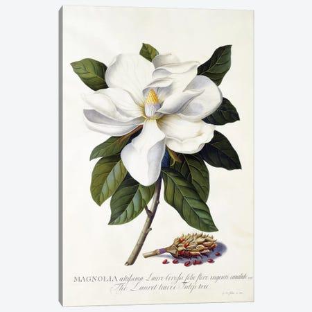 Magnolia grandiflora, c.1743  Canvas Print #GDE13} by Georg Dionysius Ehret Canvas Wall Art