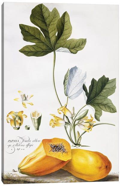 Papaya,  Canvas Art Print