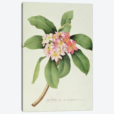 Plumeria Canvas Print #GDE21} by Georg Dionysius Ehret Art Print