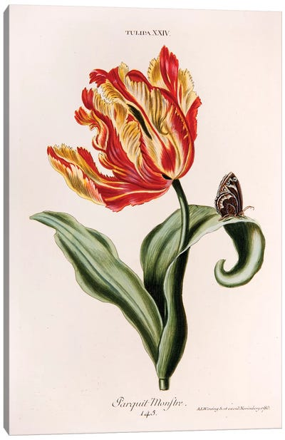 Tulipa XXIV (Parquit-Monstre) Canvas Art Print