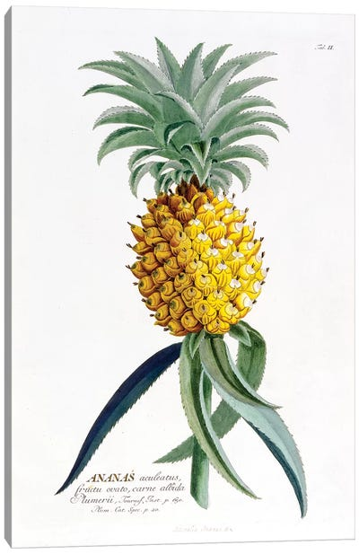 Ananas (Pineapple) Canvas Art Print