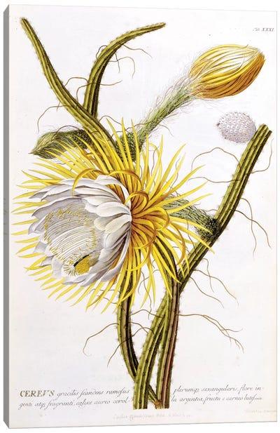 Cereus Canvas Art Print