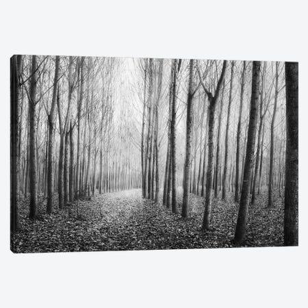 Autumn Mist Canvas Print #GDI8} by George Digalakis Art Print