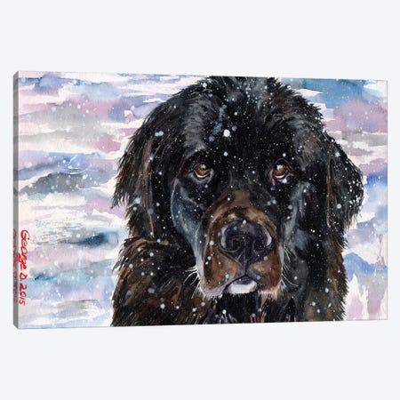 Newfoundland Canvas Print #GDY111} by George Dyachenko Canvas Wall Art
