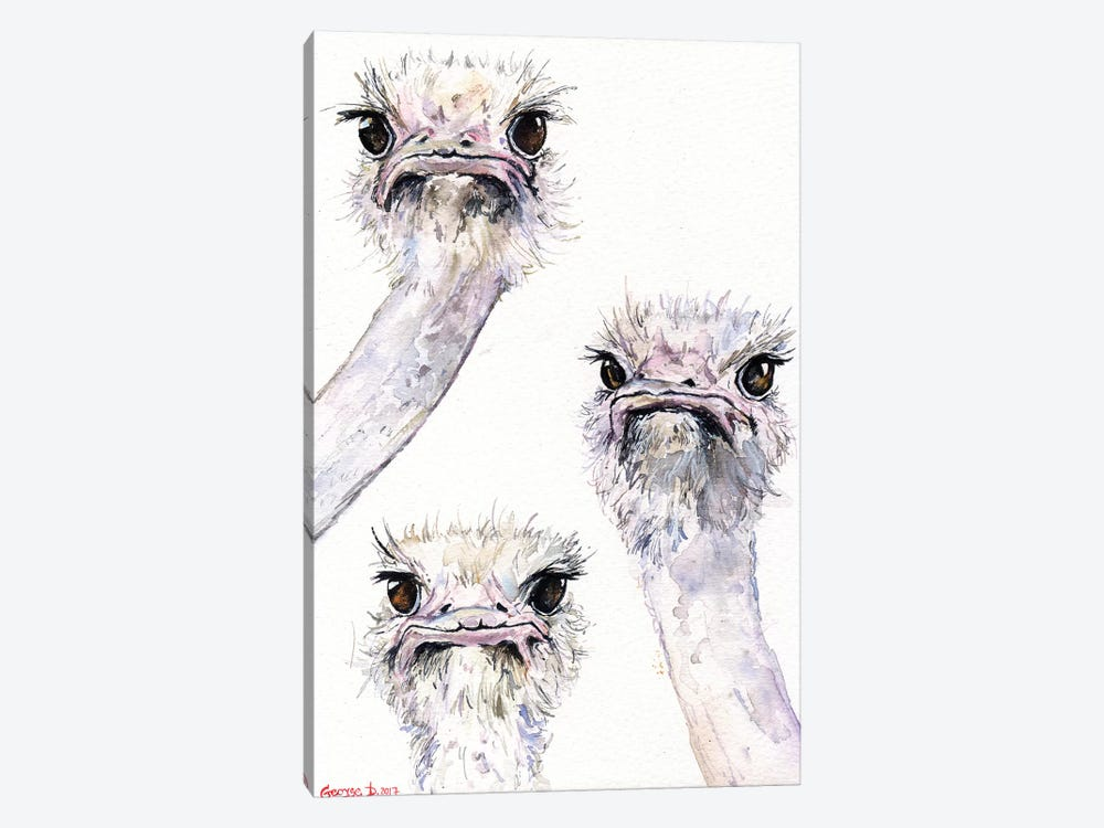 Ostriches by George Dyachenko 1-piece Canvas Artwork