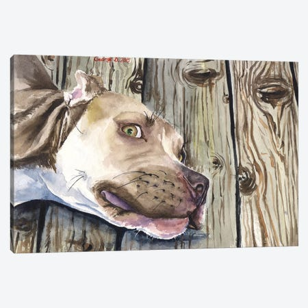 Pitbull Canvas Print #GDY117} by George Dyachenko Canvas Art Print