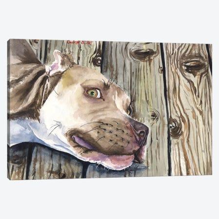 Pitbull Canvas Print #GDY117} by George Dyachenko Canvas Art Print